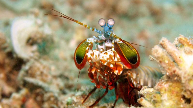 Quand la protection pour sportifs s'inspire d'un crustacé