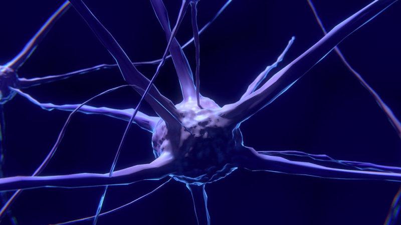 Une synapse manipulée inverse un comportement