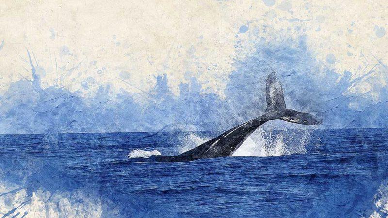 La baleine bleue optimise!