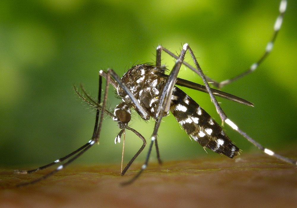 Ola qui voilà? Attention, c'est Zika.