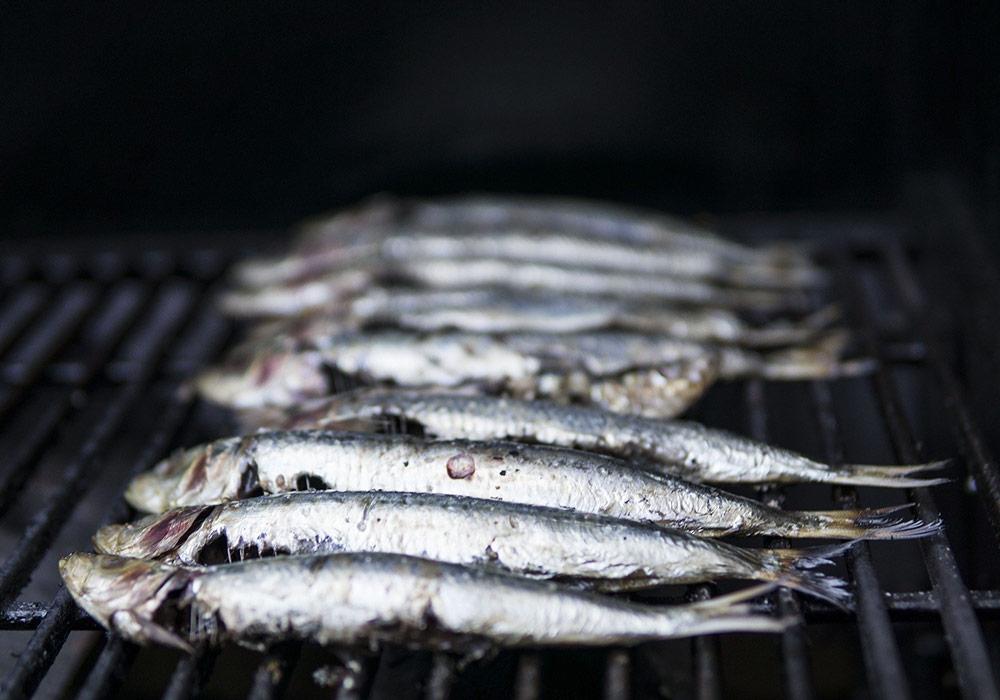 A la quête aux sardines et aux anchois en Méditerranée