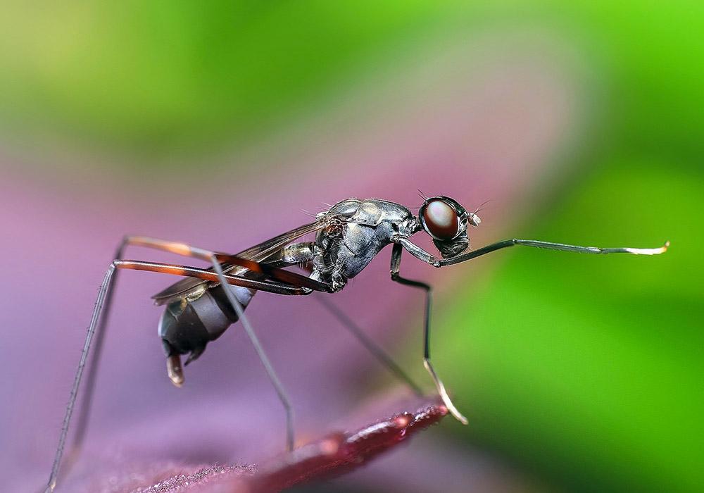 Les Batailles de Rap Épiques de Biologie : Fourmis vs Termites
