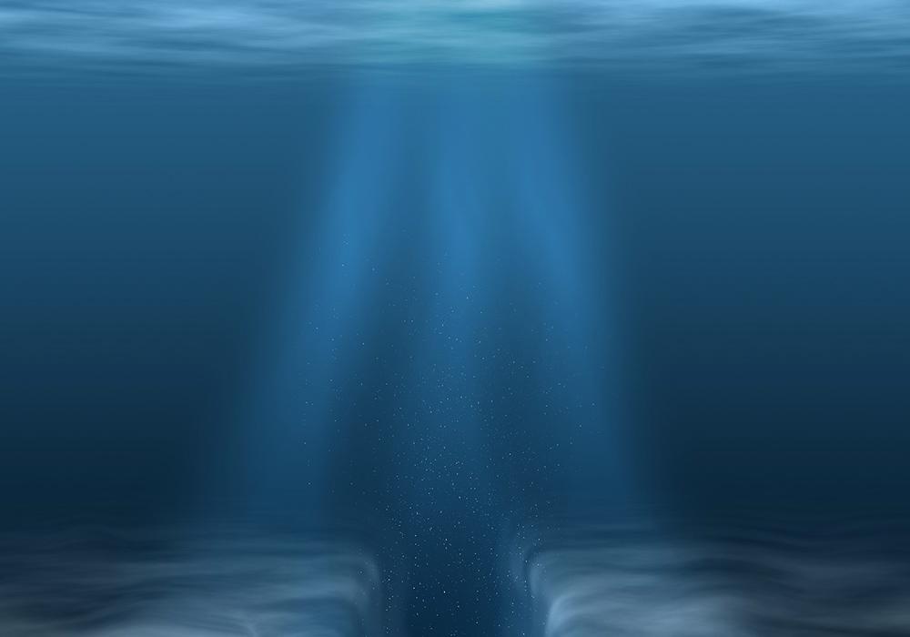 Le plancton #1