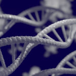 Hélices de l'ADN