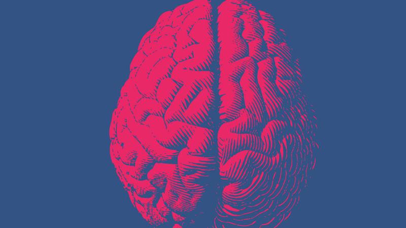 Des différences dans la structure cérébrale de l'empathie