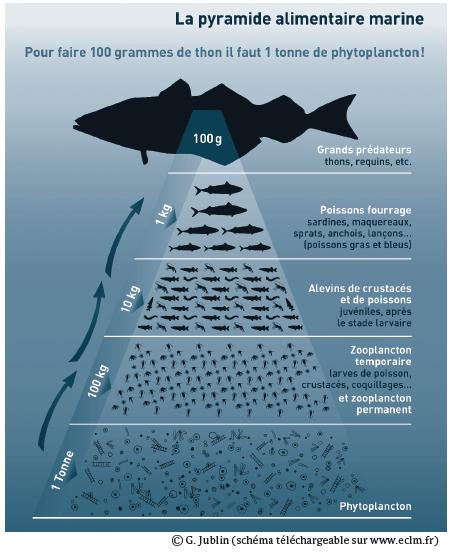 pyramide_plancton.png
