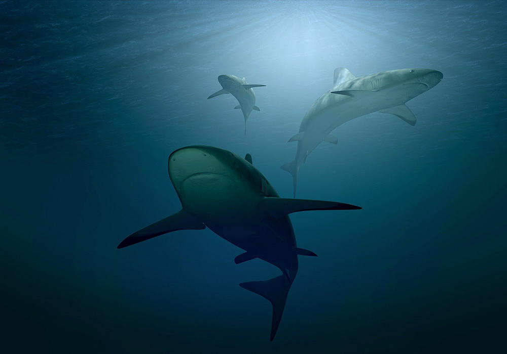 Qui a peur du grand méchant requin?