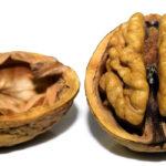 Photographie d'une noix ouverte.
