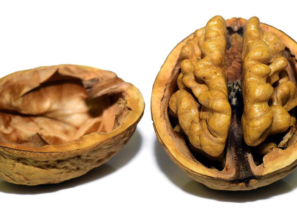 Une alimentation liée à l'anatomie cérébrale