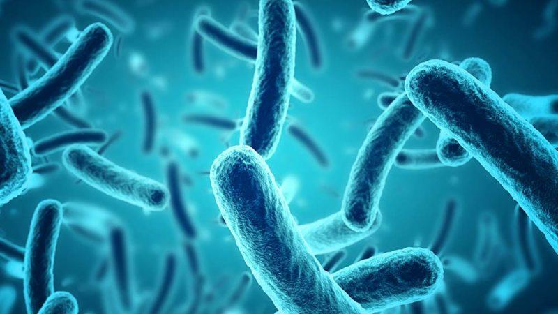 Robotique: quand les bactéries prennent le contrôle