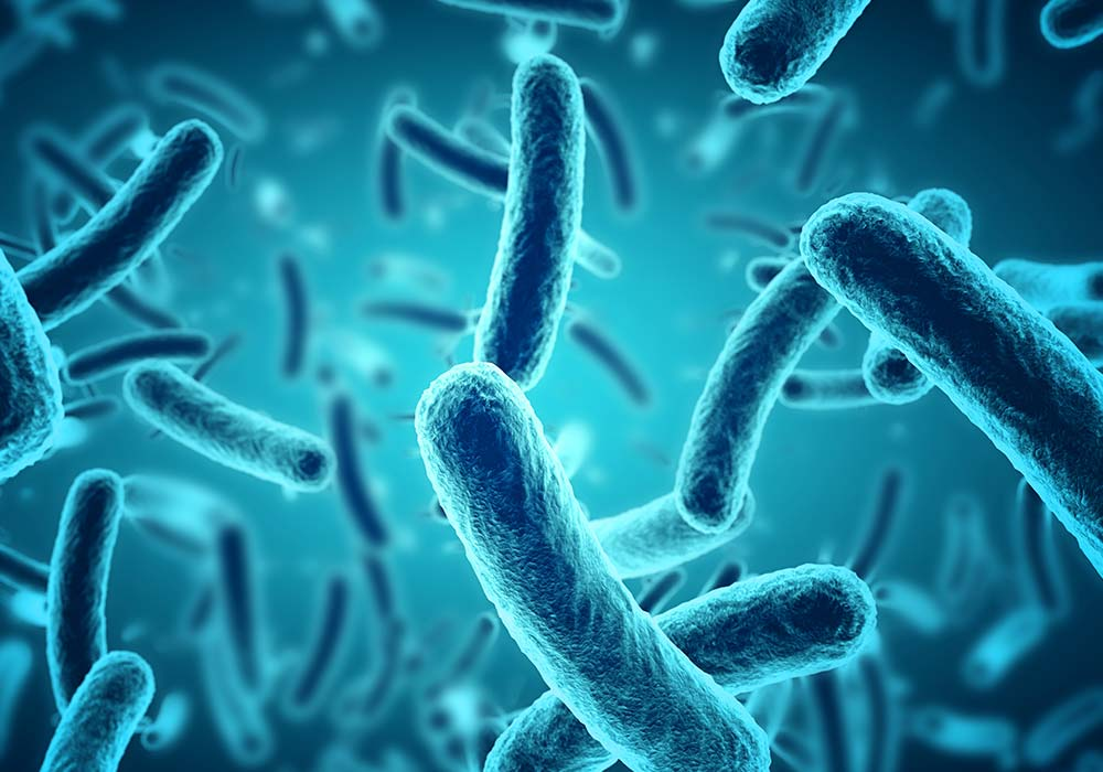 Les bactéries lactiques comme antifongiques