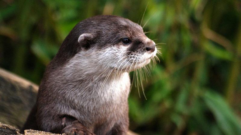 Les populations de vertébrés sauvages ont chuté de 68 %