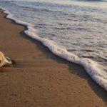 Photographie d'une plage sur laquelle un gobelet en plastique s'enfonce dans le sable.