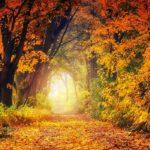 Photographie d'une forêt en automne.