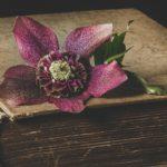Livre ancien recouvert d'une fleur rose