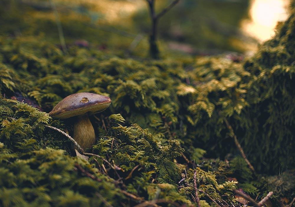Arbres et champignons : une véritable histoire d'amour