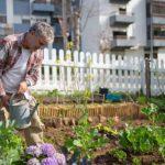 Homme qui arrose ses plantations dans un jardin partagé au milieu des immeubles.